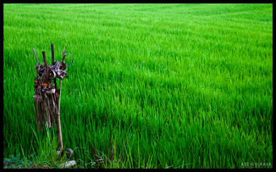 Balinese Rice Field Keeper by AdeRossi