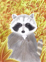 Raccoon by kathe-cat