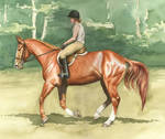 Chestnut Canter