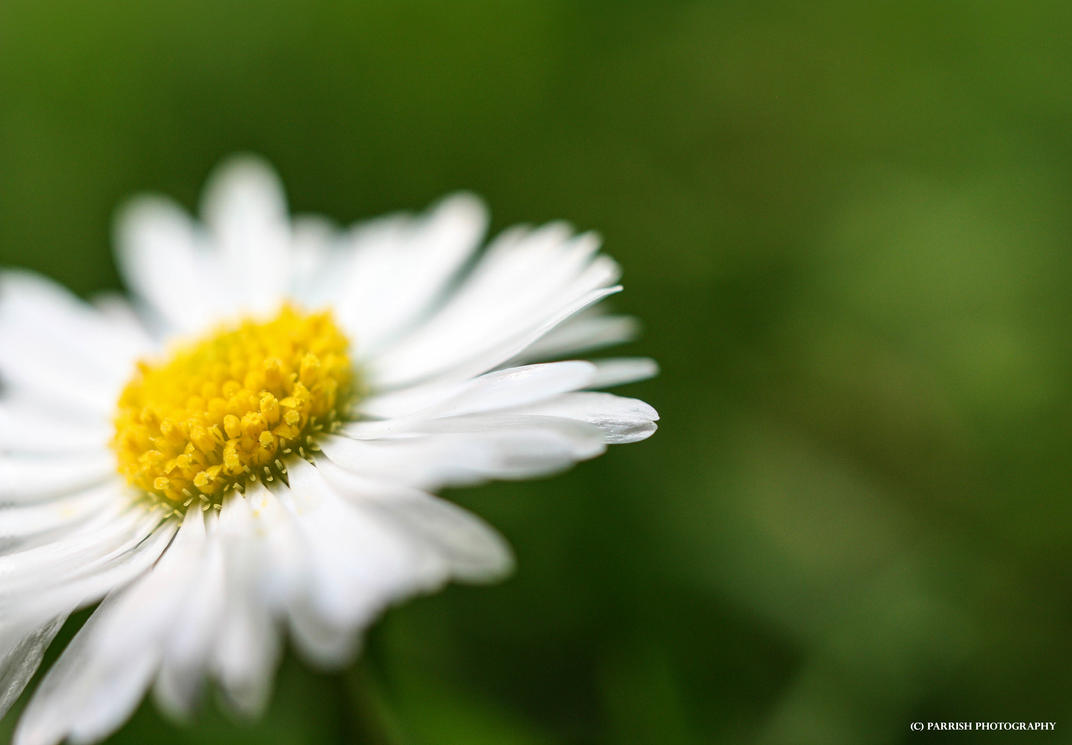 English White by PINK-ROSE14