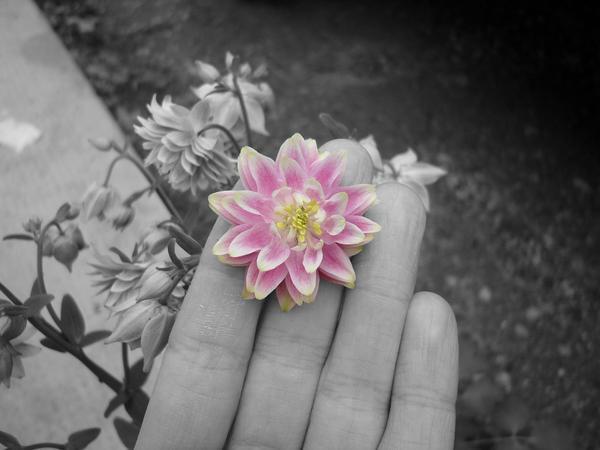 Driveway Flower by LittleDende