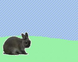 Bunny Anime 3 by LittleDende