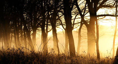 foggy daybreak by vularia