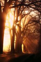 magical illumination by vularia