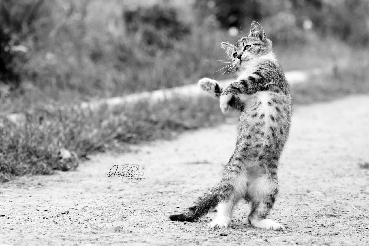 little dancer by vularia