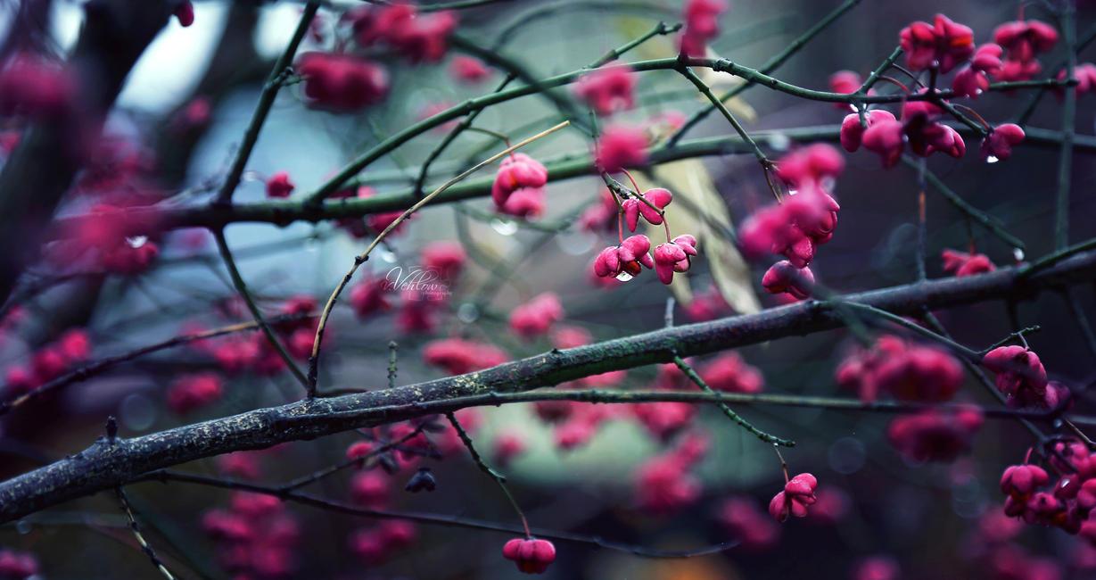 pink n blue by vularia