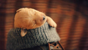 puppy dreams by vularia