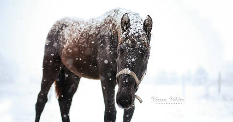 first snow by vularia