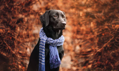 the blue scarf