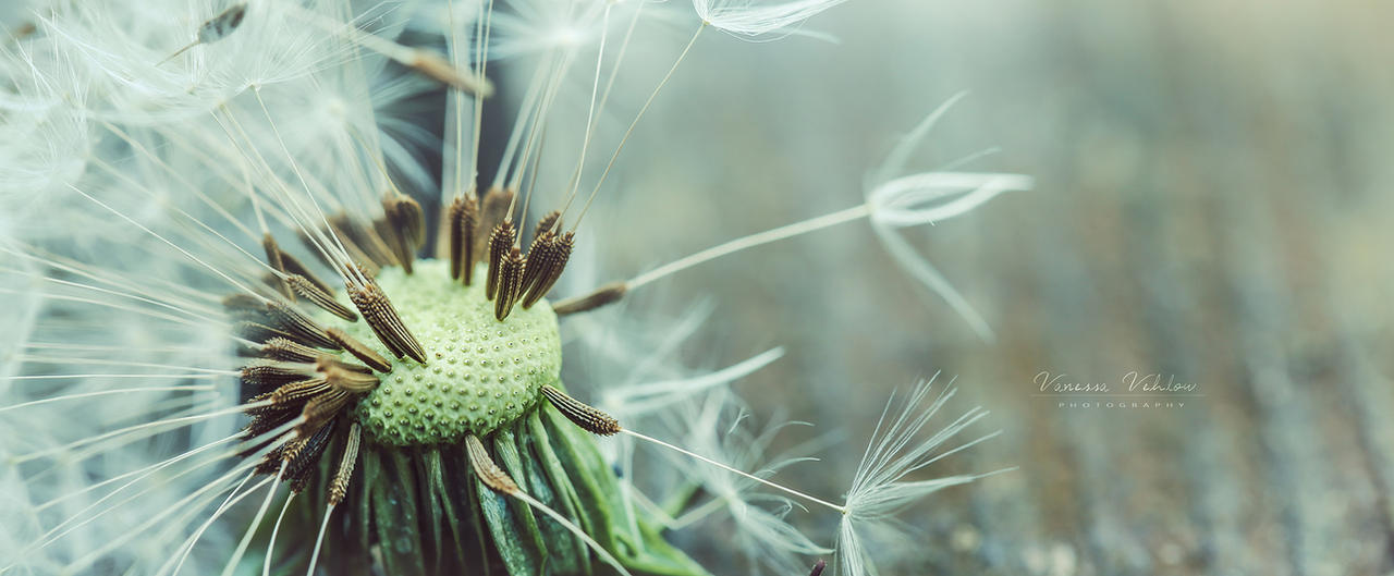 soft and spiky by vularia
