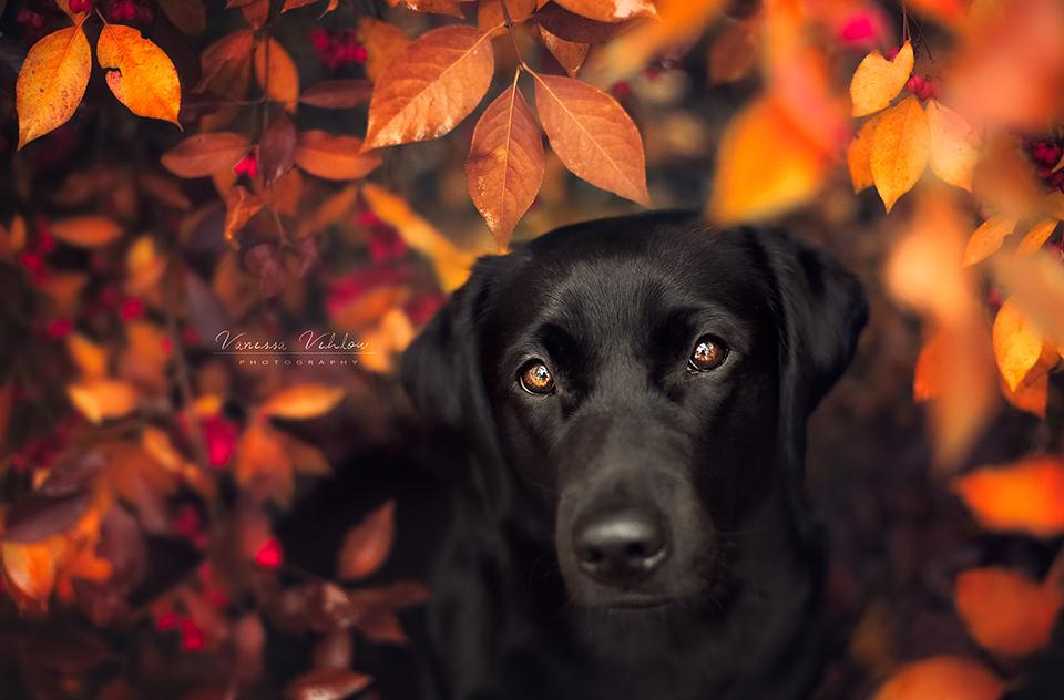 autumn girl by vularia