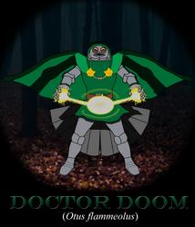 Doctor Doom (Flammulated Owl) by JacobJawson