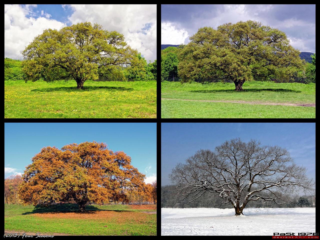 video 4 seasons