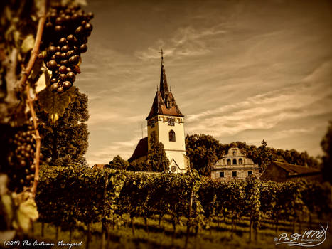 The Autumn Vineyard