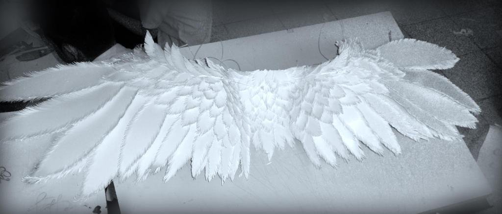 :Wings: by PrePAWSterous