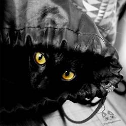 :My Bag!: by PrePAWSterous
