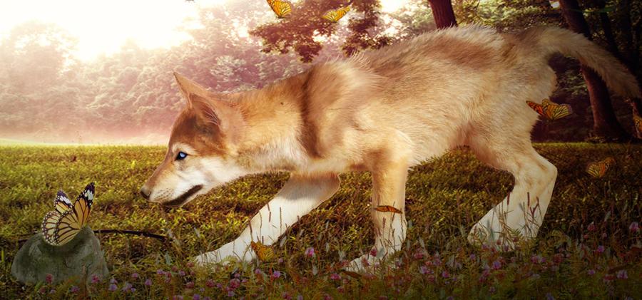Puppy Love by Vixie-Pixie