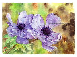 Anemones by auroreblackcat