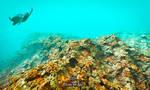 Under the sea! by IvanDuran9