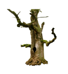 Old Tree PNG