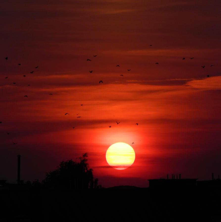 Sunset 2 by diamar86
