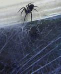 spider stock 5