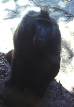 zoo stock primates 25