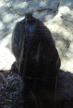 zoo stock primates 26
