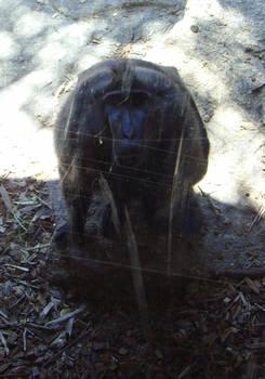 zoo stock primates 27