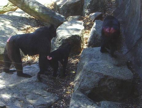 zoo stock primates 29