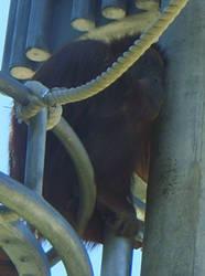 zoo stock primates 35