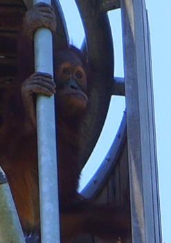 zoo stock primates 40