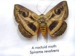 moths and butterflies stock 5