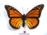 moths and butterflies stock 18