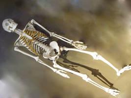 Skeleton Stock 11 by hatestock