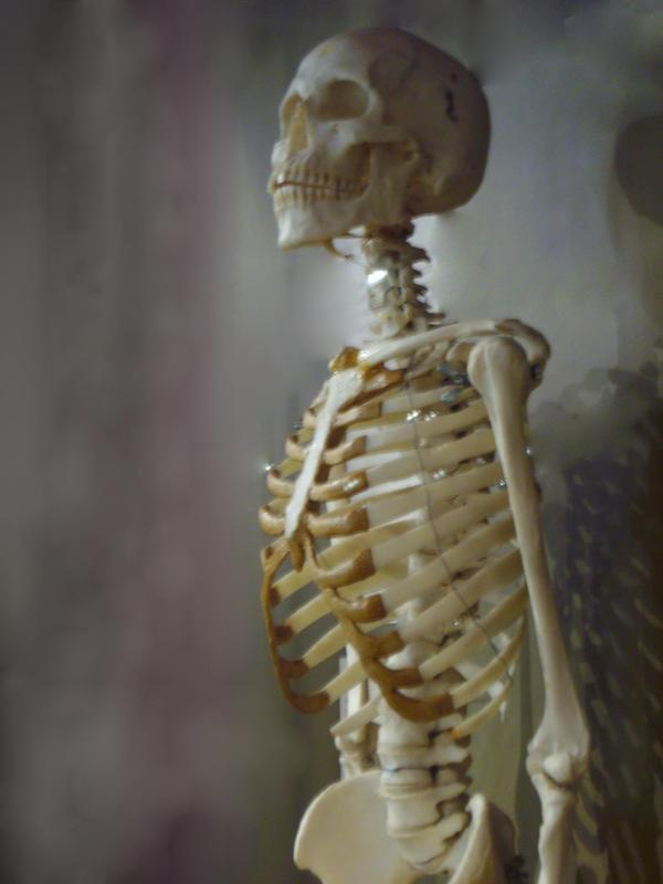Skeleton Stock 12 by hatestock