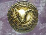 snake stock 21