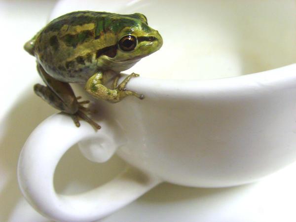 frog stock 50