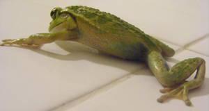 frog stock 141