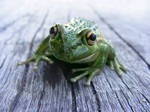 frog stock 185