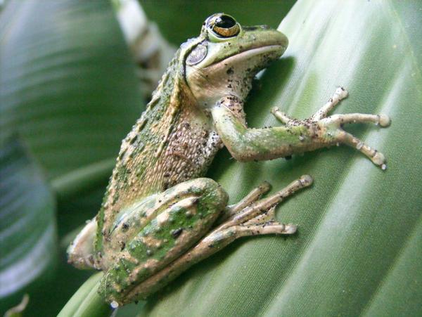 frog stock 202