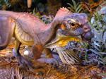 Dinosaur Stock 8