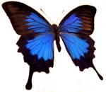moths and butterflies stock 86