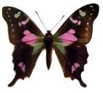 moths and butterflies stock 88