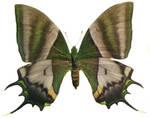 moths and butterflies stock 89