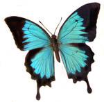 moths and butterflies stock 92