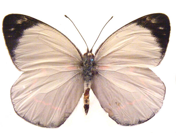 moths and butterflies stock 98 by hatestock