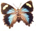 moths and butterflies stock100