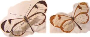 moths and butterflies stock113
