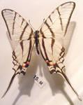 moths and butterflies stock120